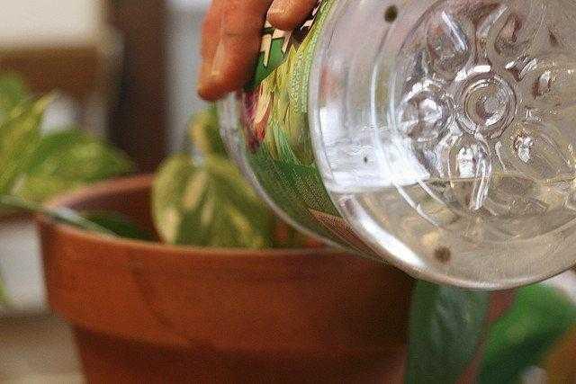 regar as plantas