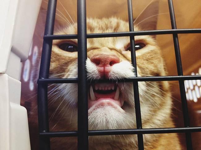 19-25-gatos-devastados-ao-descobrirem-que-estao-no-veterinario