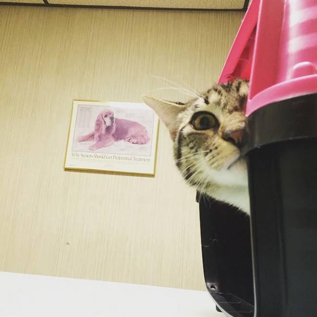 24-25-gatos-devastados-ao-descobrirem-que-estao-no-veterinario