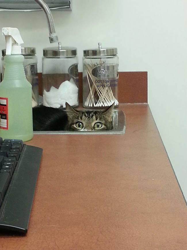 25-25-gatos-devastados-ao-descobrirem-que-estao-no-veterinario