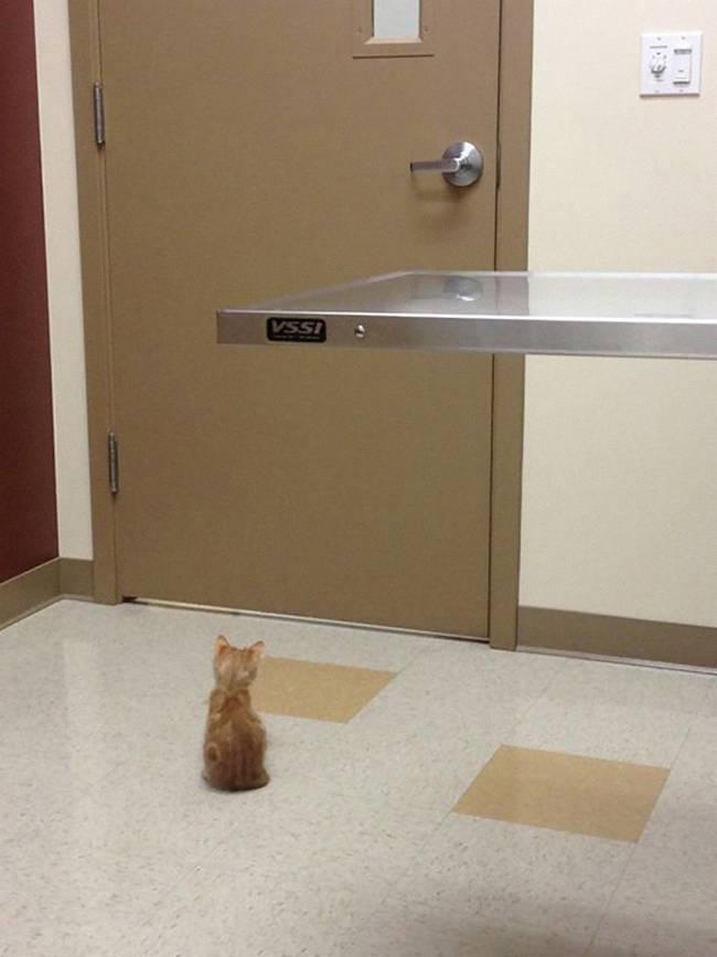 4-25-gatos-devastados-ao-descobrirem-que-estao-no-veterinario