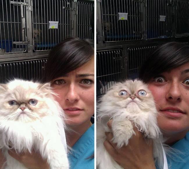 6-25-gatos-devastados-ao-descobrirem-que-estao-no-veterinario