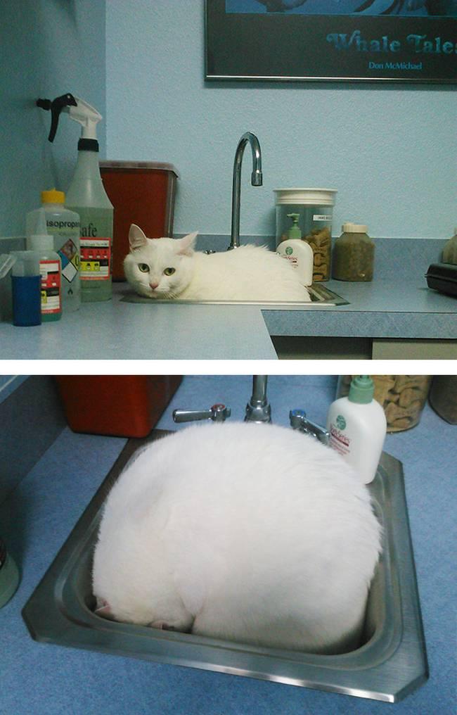 7-25-gatos-devastados-ao-descobrirem-que-estao-no-veterinario