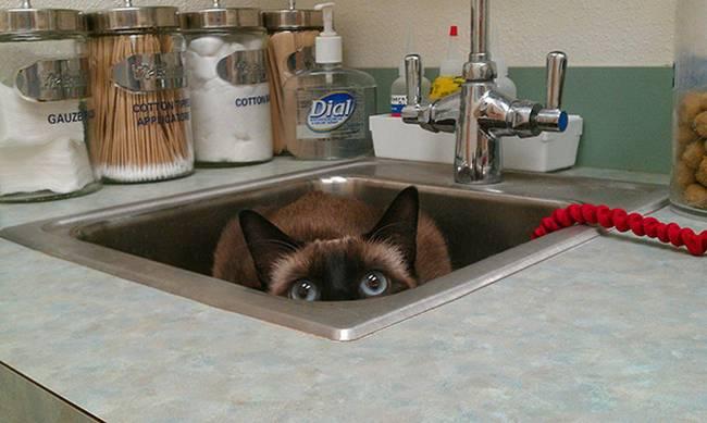 8-25-gatos-devastados-ao-descobrirem-que-estao-no-veterinario