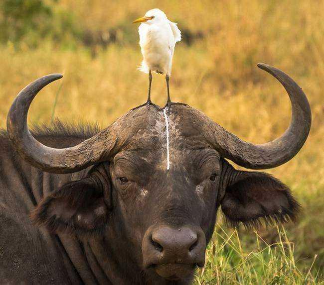 15 imagens mostrando que existe bom humor na vida selvagem