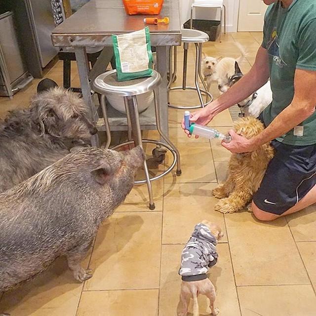 Homem dedica a vida a adotar animais que ninguém mais quer