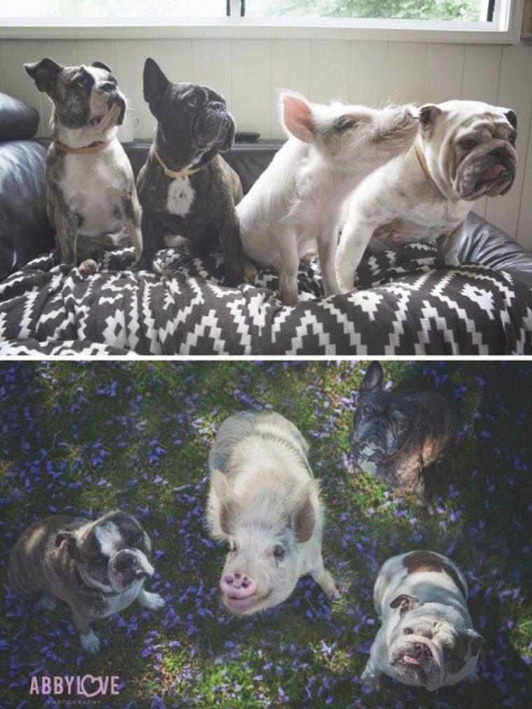 15 fotos do antes e depois de animais que cresceram juntos