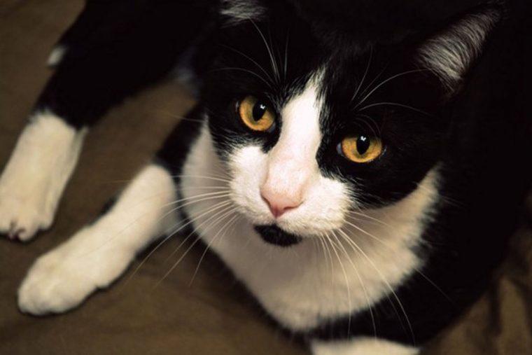 O comportamento estranho desse gato salvou a vida de sua dona