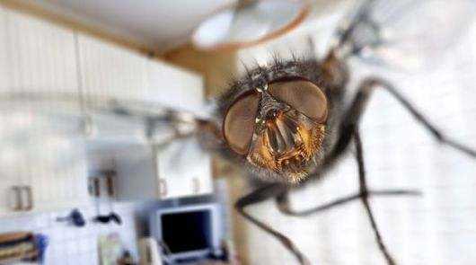 truques caseiros para evitar moscas em casa - Truques caseiros para evitar moscas em casa