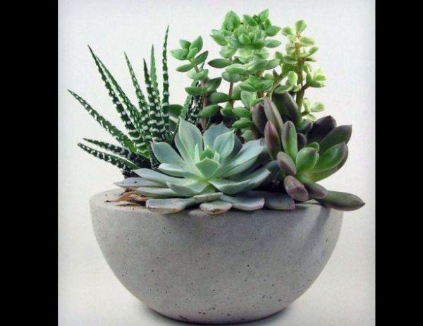 vaso de concreto com suculentas