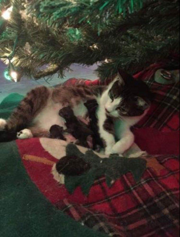 Gata grávida tem seus filhotes sob a árvore de natal da família