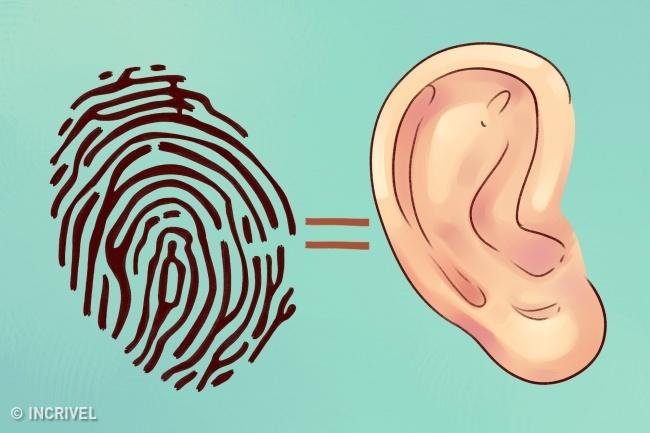 O que suas orelhas dizem sobre sua saúde