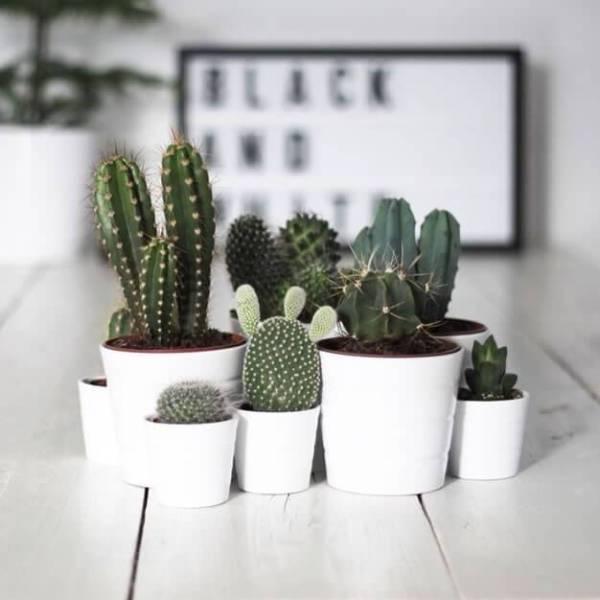 4 Motivos para encher sua casa com cactos