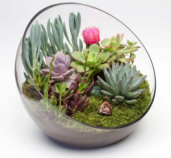 decoracao suculentas vidro