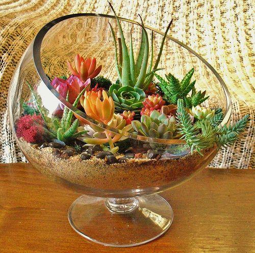 decoracao suculentas vidro terrario
