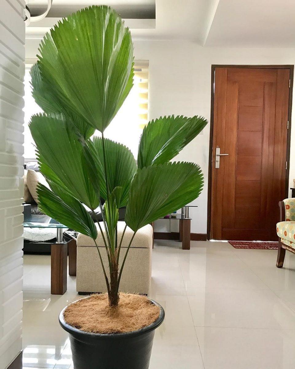 5 plantas para se ter em casa e que não requerem muitos cuidados