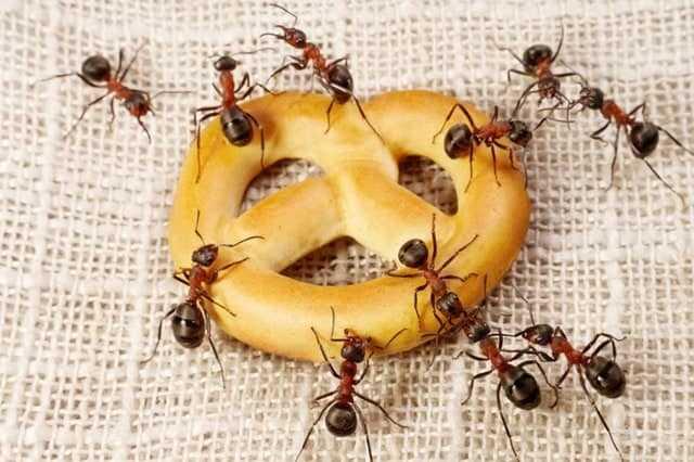 5 Dicas caseiras de como se livrar das formigas