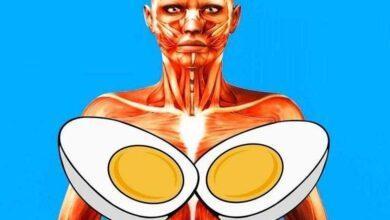 Foto de Veja o que acontece quando você come ovo todos os dias