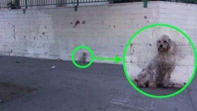 Foto de Atropelaram este pobre cão com o carro… Mas o que aconteceu em seguida foi incrível!