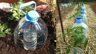 Foto de Dica fantástica para regar plantas e poupar água ao mesmo tempo