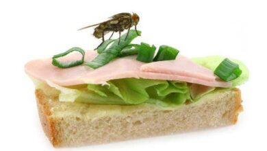 Foto de O Que Acontece Quando uma Mosca Pousa na Sua Comida? Descubra!
