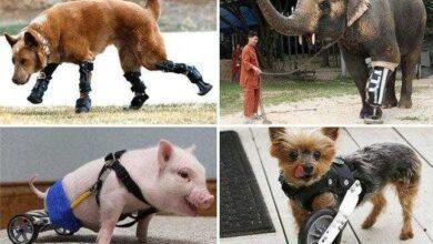 10 Animais com próteses que vão restaurar sua fé na humanidade fs