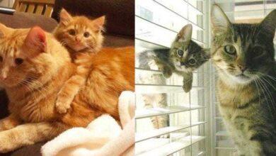 Foto de 11 gatos com versões em miniatura de derreter o coração