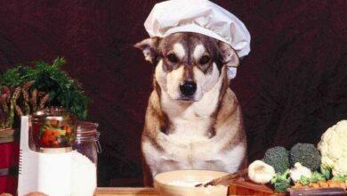 Foto de 18 alimentos saudáveis que vão fortalecer a imunidade do seu cachorro
