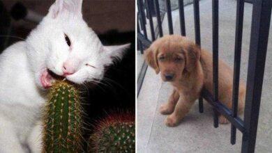 Foto de 19 Animais que estão tendo um dia difícil