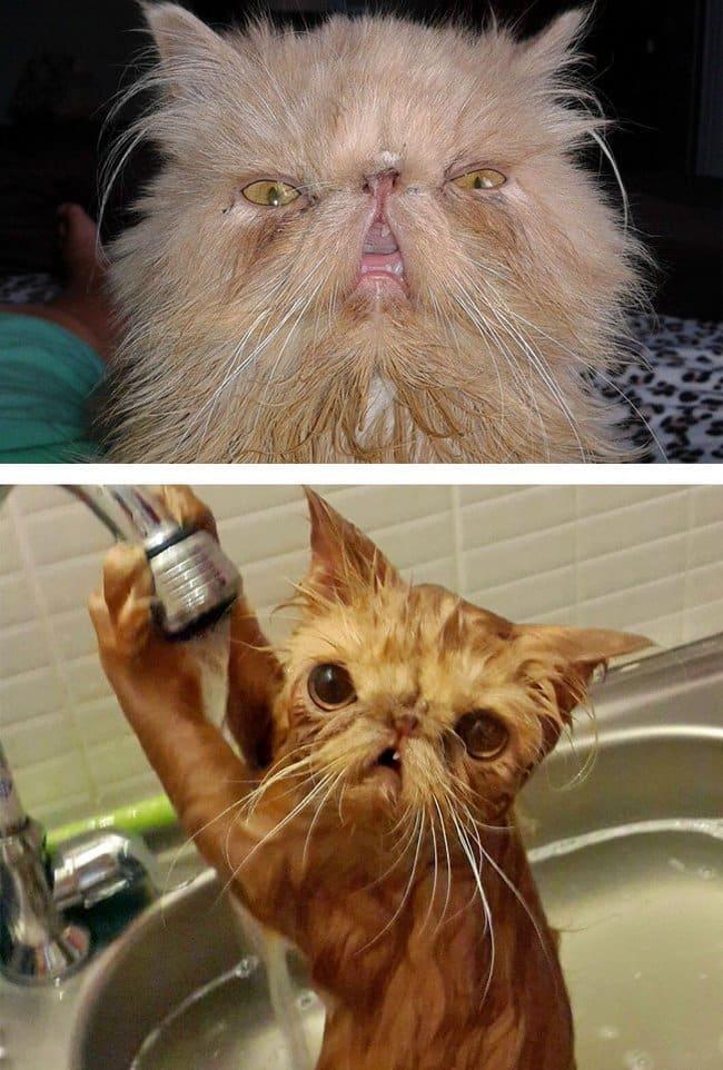 21 Fotos reveladoras de animais antes e durante o banho