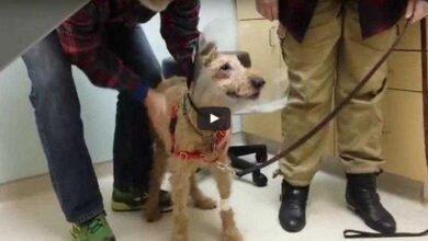 Foto de A reação de um cachorro cego, após a cirurgia, ao ver sua família pela primeira vez é emocionante