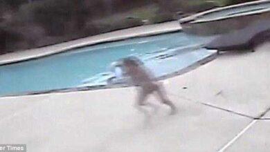 Foto de Menina de 5 anos vê a mãe inanimada na piscina. Não vai acreditar no que a câmera de segurança captou depois…