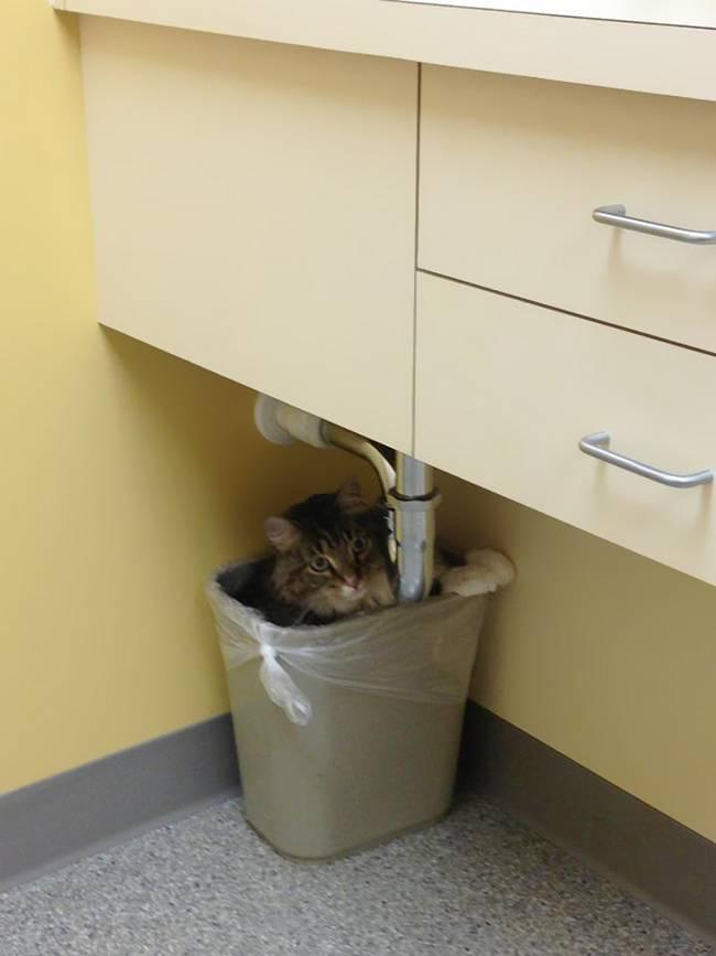 13-25-gatos-devastados-ao-descobrirem-que-estao-no-veterinario
