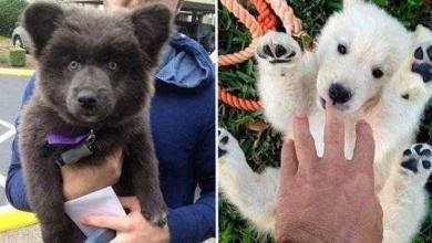 Foto de 14 cães fofos que se parecem com bichos de pelúcia