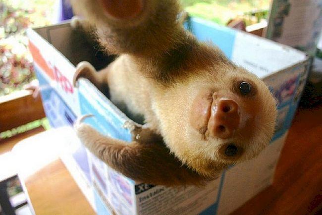 15 Animais com selfies mais legais que os seus