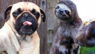 Foto de 15 Animais com selfies mais legais que os seus