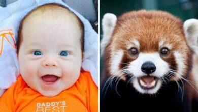 15 Fotos que comprovam que os animais podem sentir emoções iguais as crianças