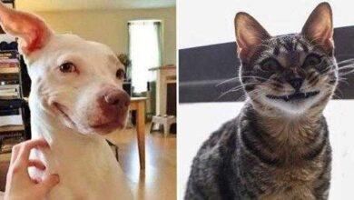 23 animais que tentaram dar um sorriso na hora da foto