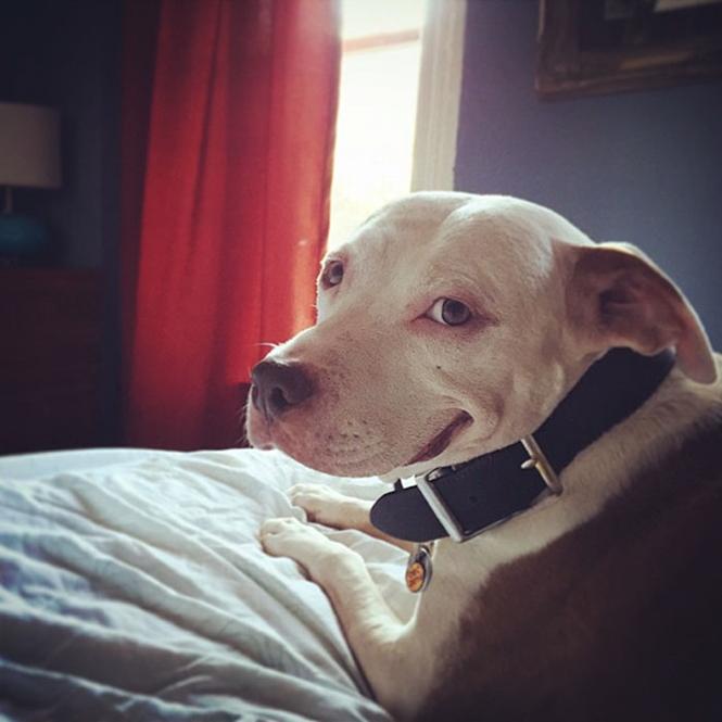 Conheça o cachorro mais feliz do mundo