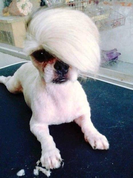 As 20 piores tosas e penteados em cães e gatos