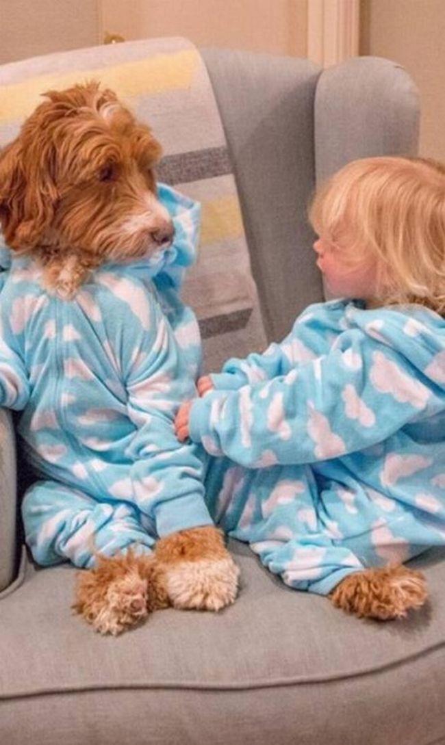 cachorro-roupas-bebe-1