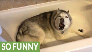 Esta mulher grava seu cão na banheira. 10 segundos depois, não consigo parar de rir