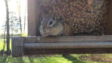 O pequeno esquilo foi pego roubando, veja como ele reage… IMPAGÁVEL