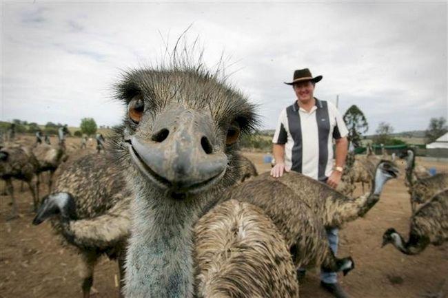 selfie-animais-3