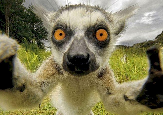 selfie-animais-4