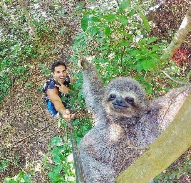 selfie-animais-7