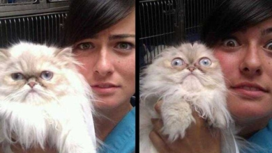 Foto de 25 Gatos assustados ao descobrirem que estão no veterinário