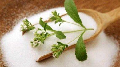 Aprenda a cultivar stevia em casa