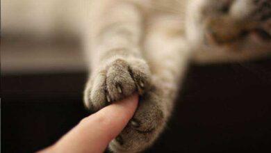 Momento tocante mostra foto de gato segurando mão de dono minutos antes de sua morte.