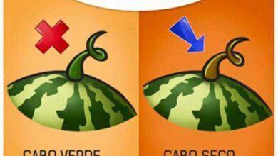 Foto de Como escolher melancia: 5 dicas para você nunca mais comprar melancias aguadas!!
